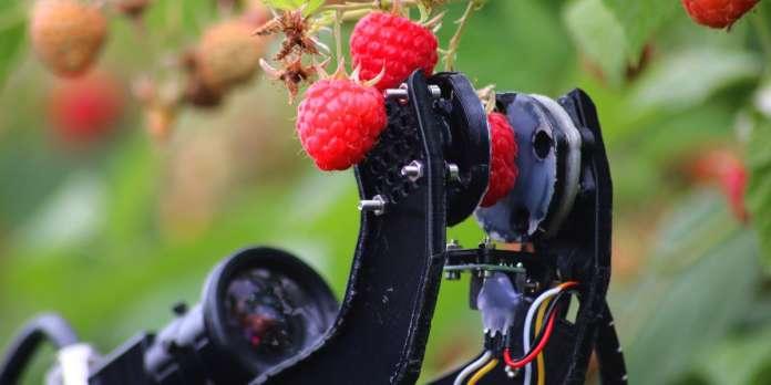 Il a suffi que « Robocrop » cueille une framboise au Royaume-Uni pour que toute la filière rêve de robotisation