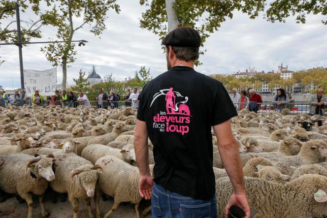 Un éleveur et son troupeau lors d'un rassemblement de protestation contre le « plan loup», à Lyon, en octobre 2017.