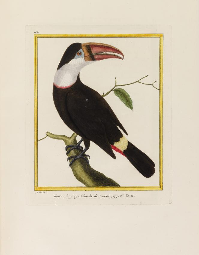 En vente le 18 juin chez Sotheby's, L'«Histoire naturelle des oiseaux», de Buffon, en 9 volumes complets de toutes leurs planches (449 x 305 mm). Estimation : 25.000-35.000 euros.