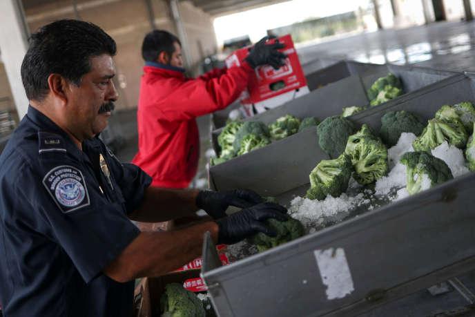 Joe Alvarado, spécialiste de l'agriculture aux États-Unis (CBP), vérifie les brocolis importés du Mexique, à Pharr, au Texas, le 4 octobre 2018.