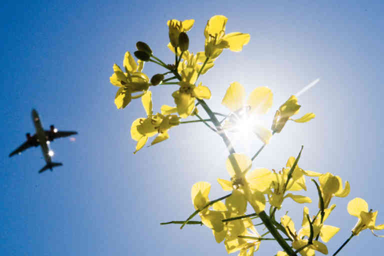 13 May 2019, Lower Saxony, Langenhagen: A passenger plane approaching Hannover Airport flies over a canola field. At the start of international climate protection talks at the 10th Petersberg Climate Dialogue, Federal Environment Minister Schulze ca [...]