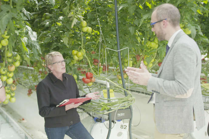 Laboratoire effectuant des recherches sur des plants de tomates hors-sol.
