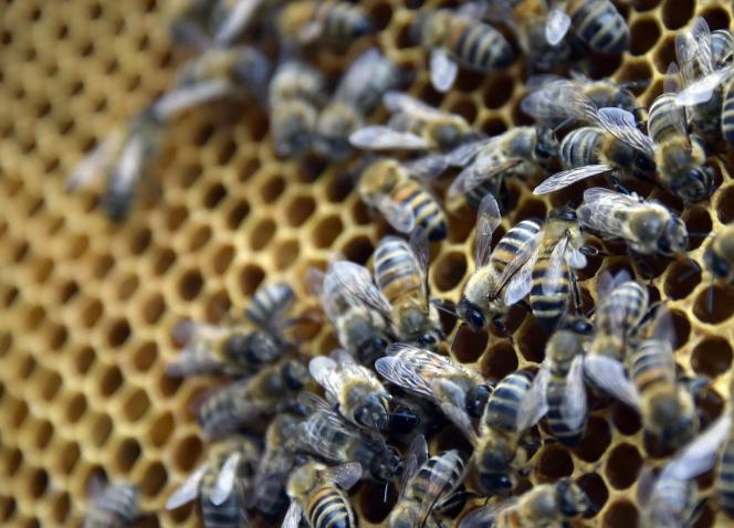 Des abeilles dans une ruche, dans le parc des Oblates, à Nantes, en 2015.