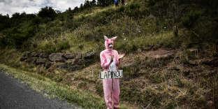 Un «Lapinou rose» sur la 15e étape du Tour de France 2018 entre Millau et Carcassonne.