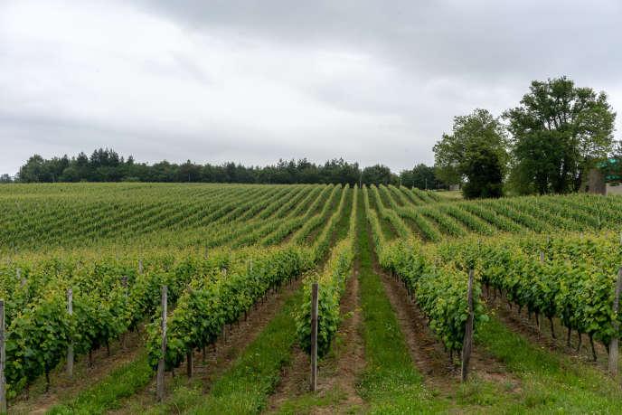 Appellations, prix, goûts… Le vin du Sud-Ouest en dix questions