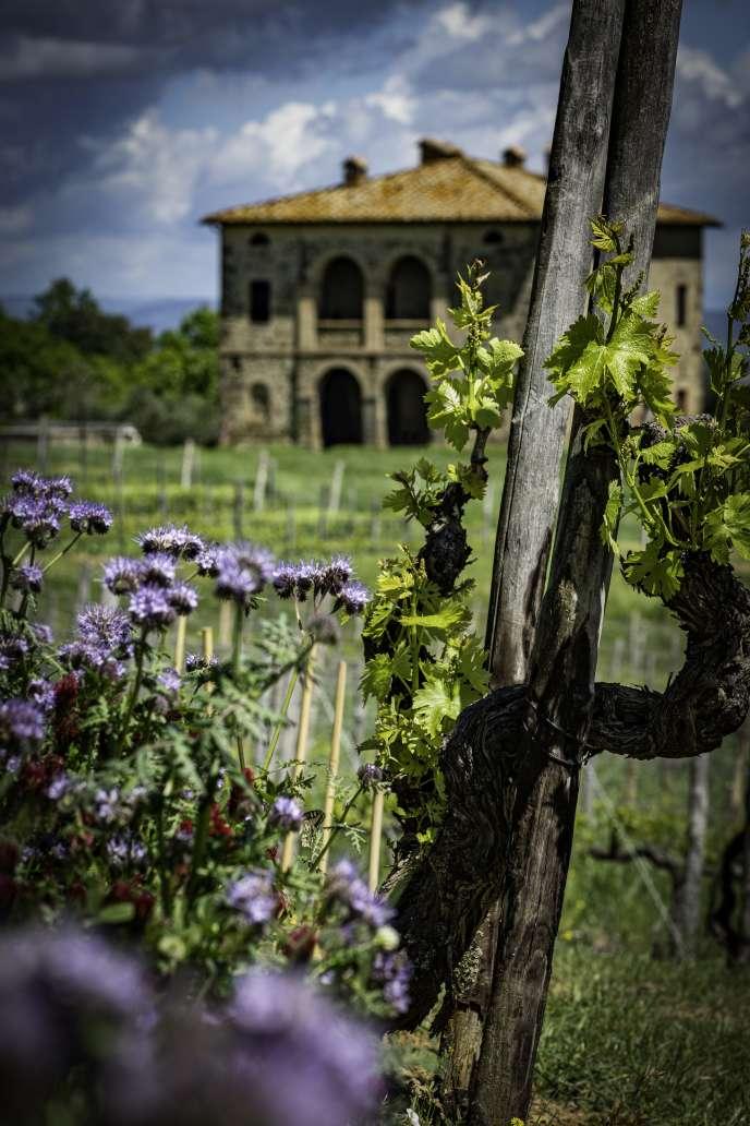 Le domaine Biondi-Santi et ses vignes au premier plan.
