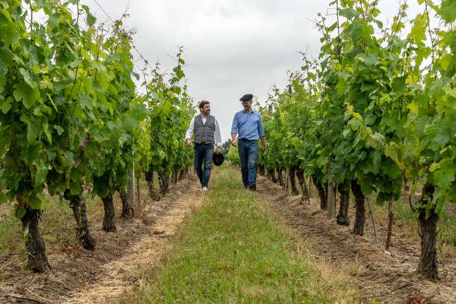 Lionel Osmin et Olivier Bourdet-Pees dans les vignes du madiran. Le 14 juin 2019.