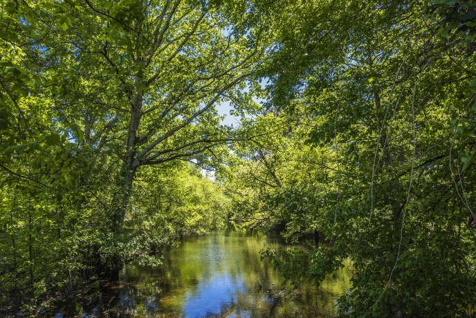 Bordure de rivière au parc de la Chêneraie, en Gironde.
