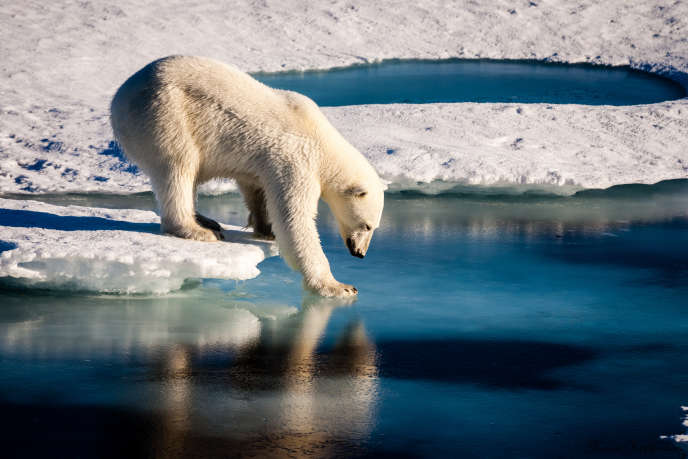 Un ours polaire sur une photo non datée fournie par l'Union européenne des géosciences le 13 septembre 2016.
