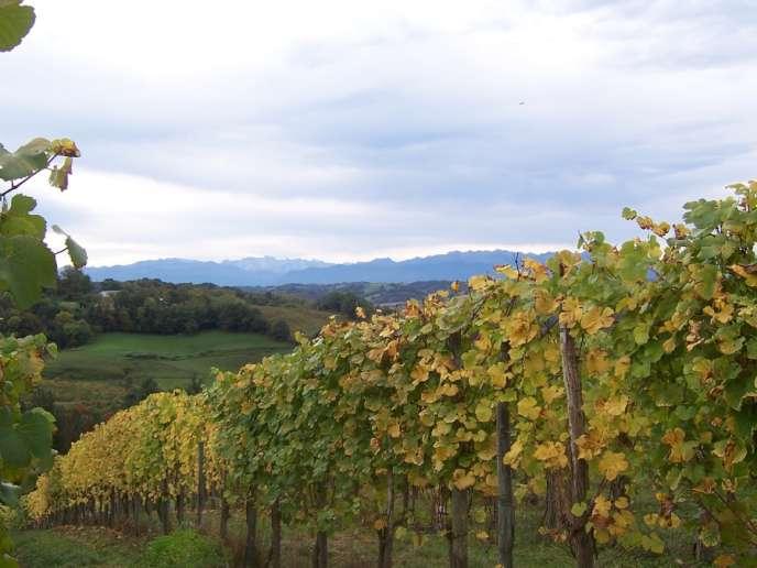 Vignoble du jurançon, commune de Monein (Pyrénées-Atlantique).