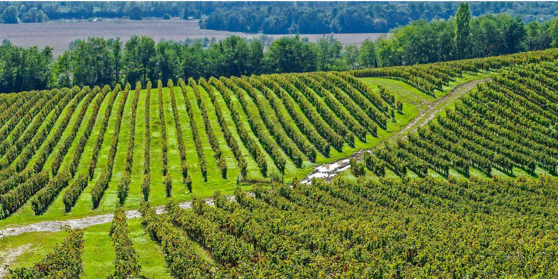 France, Gironde, rive droite de la Garonne, Entre-deux-Mers, Langoiran, vignoble AOC 1Ëres cÙtes de Bordeaux Utilisation Èditoriale uniquement, nous contacter pour toute autre utilisation