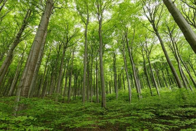 Vue d'une forêt en Allemagne.