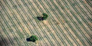 Cultures agricoles à Formosa do Rio Preto, à l'ouest de l'Etat de Bahia, au Brésil, le 10 juin.