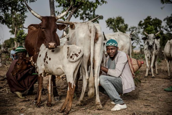Réserve pastorale de Kachia, le 16avril 2019. Isa Ibrahim, 30ans, est à la fois éleveur et conducteur de taxi-moto.
