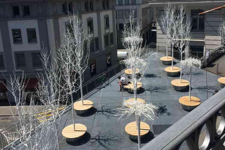 Les frênesblanchis à la chaux de cette installation réalisée dans un espace très urbanisé n'ont pas besoin de terre, à la différence de leurs homologues vivants.
