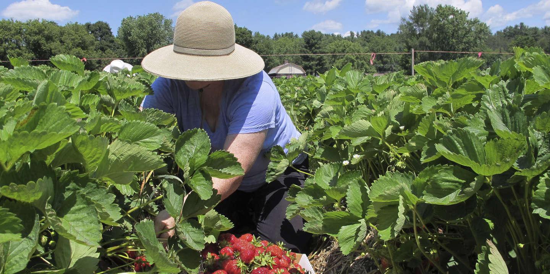 Que Planter En Octobre Sous Serre les serres chauffées autorisées sous conditions dans l