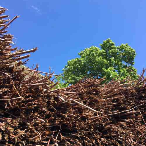 Cette installation évoque le devenir du bois mort. Les souches dressées à l'intérieur du mausolée de branchages seront décomposées grâceà l'action de champignons et d'insectes lignicoles.