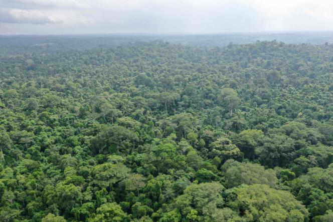 Vue aérienne de la forêt d'Omo, au Nigeria.