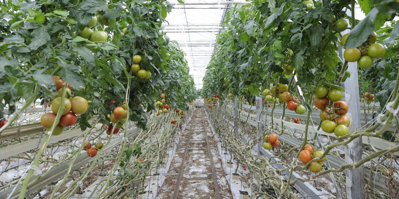 «Monsieur le Ministre de l'agriculture et de l'alimentation, défendons une agriculture biologique de qualité»