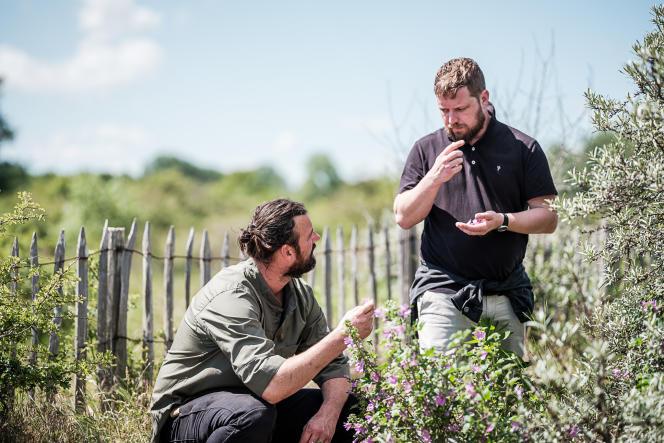 Willem Hiele et Kobus van der Merwe en pleine cueillette sauvage, dans les dunes de Coxyde, en Flandre-Occidentale.
