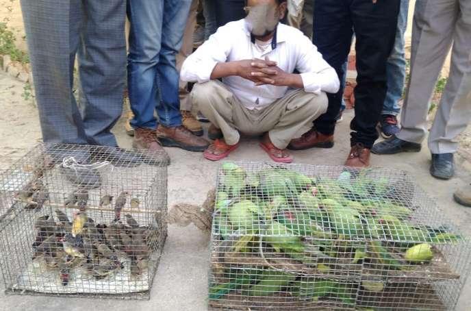 Le bureau indien de lutte contre la criminalité liée à la faune sauvage a saisi des perruches et des capucins vivants lors decontrôles routiers.
