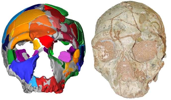Le crâne Apidima 2 et sa reconstitution virtuelle.