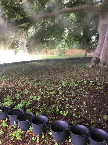 L'installation évoque l'arbre Garoé, un «arbre-fontaine» qui,jusqu'au XVIIesiècle, condensait l'eau sous forme de brouillard, dans une des îles Canaries.