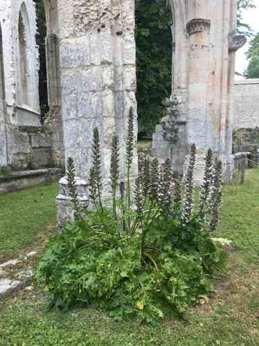 L'incomparable poésie des ruines...