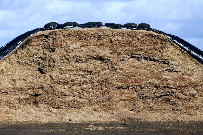 Des pneus d'ensilage dans une exploitation à Hauteville-la-Guichard (Manche).