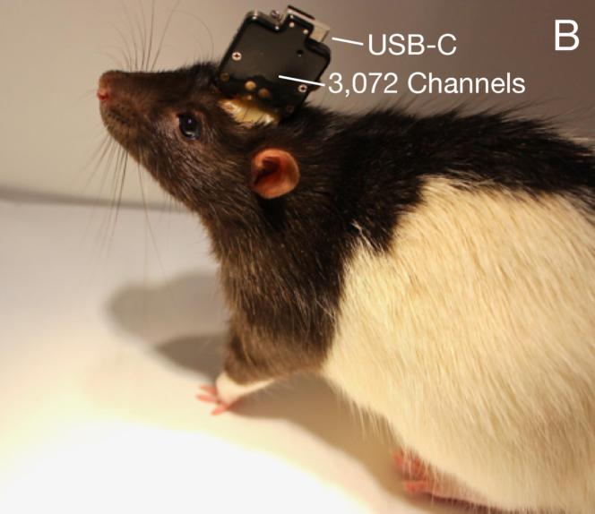 Les images fournies par Neuralink des test de leurs implants cérébraux sur des rats de laboratoire.