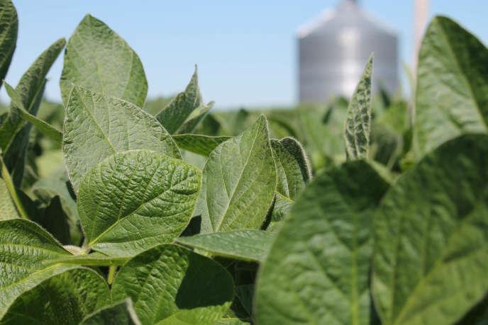 Un champ de soja à Harvard, dans l'Illinois (Etats-Unis), en juillet 2018.