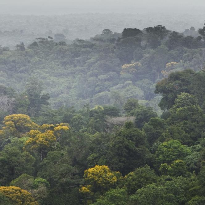 Alors que le Brésil perd chaque année quelque 8000 kilomètres carrés de forêt sur le seul territoire amazonien, M.Salles [ministre de l'environnement] a affirmé que cela représentait une «déforestation quasi nulle».