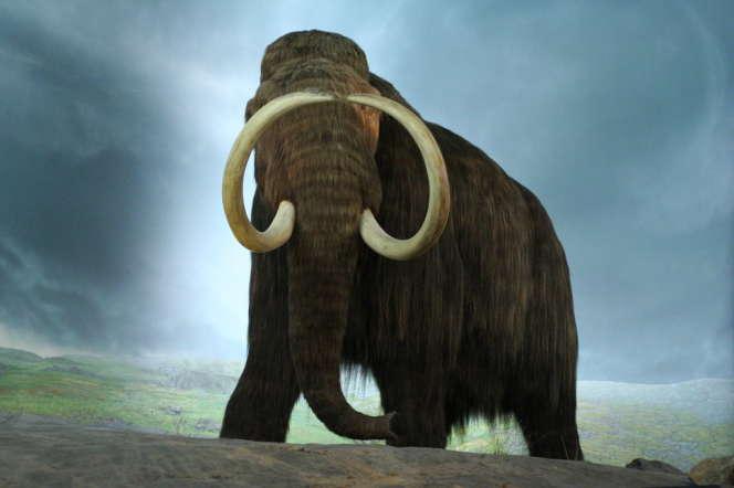 Reconstitution d'un mammouth au musée royal de la Colombie-Britannique.