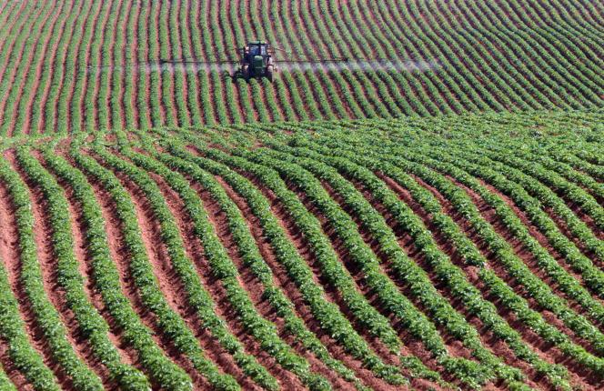 Traitement d'un champ de pommes de terre par épandage à Park Corner, dans la province canadienne de l'Ile-du-Prince-Edouard, en 2001.