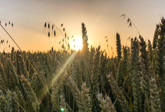 La France connaît une sécheresse qui risque de s'aggraver lors du nouvel épisode de canicule commençant le 22 juillet.