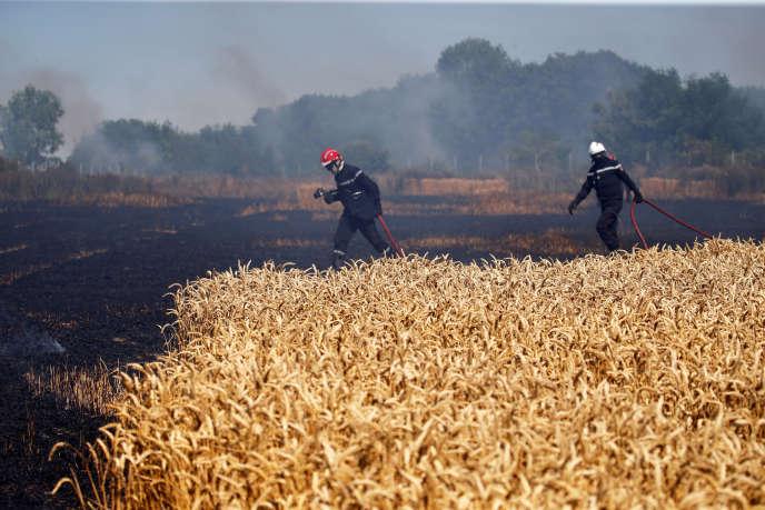 Les cultures, desséchées par les canicules et les sécheresses répétées, prennent facilement feu.