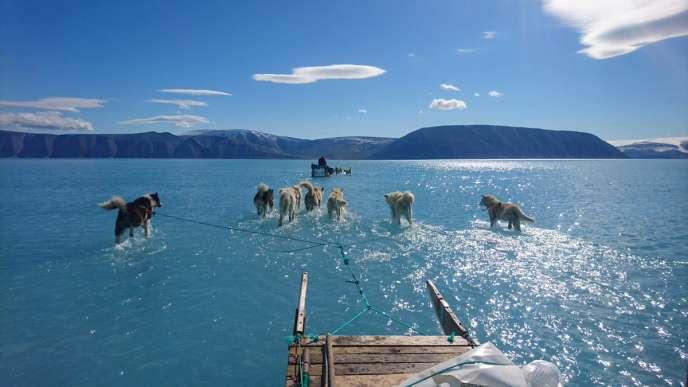 Après des jours de fortes températures, la banquise a fondu très tôt dans le fjord d'Inglefield, au nord-ouest du Groenland, le 13 juin.