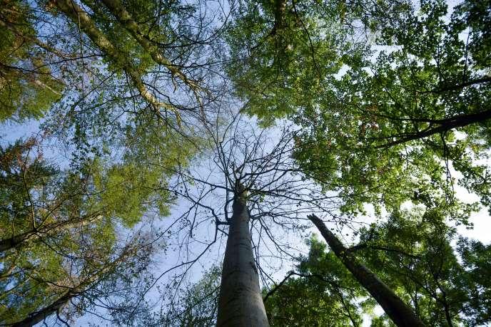 Dans un forêt de Warburg, Allemagne, le 25 juillet.