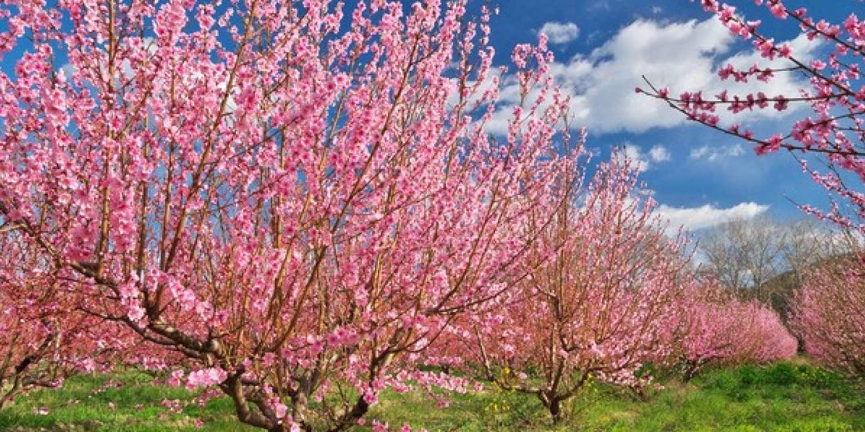 « Les épidémies révèlent des déséquilibres que l'arbre et les paysages arborés contribuent à atténuer… »