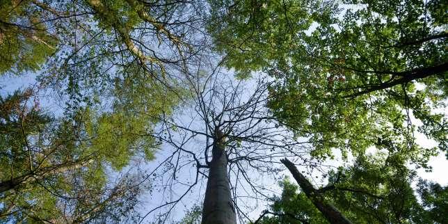 L'arbre zombie qui pourrait changer notre regard sur la forêt