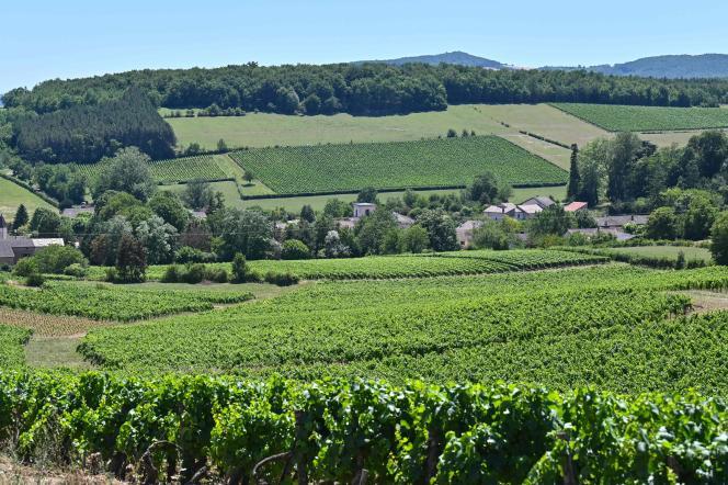 Les vignes du village de Chardonnay (Saône-et-Loire) le 10 juillet.
