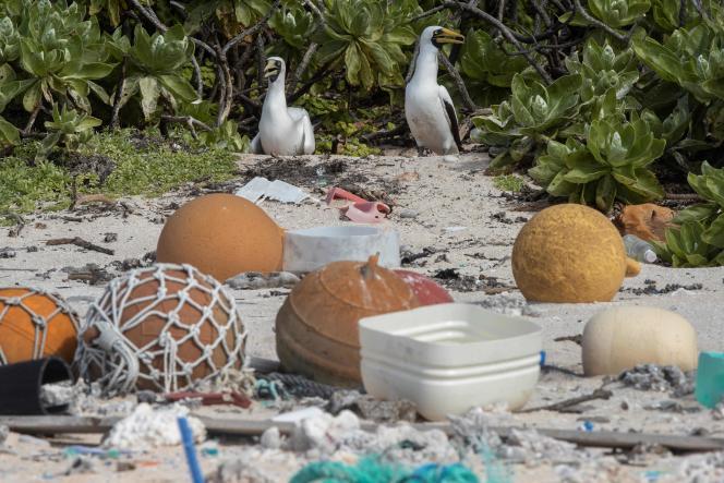 Le 10 juin 2019, deux oiseaux au milieu des ordures, sur une plage de l'île Henderson, dans l'archipel des Pitcairn, au cœur de l'océan Pacifique Sud.