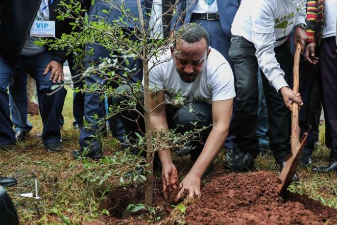 Le chef du gouverment éthiopien, Abiy Ahmed, plante un arbre àWolayta Soddo (Ethiopie), le 29 juillet.