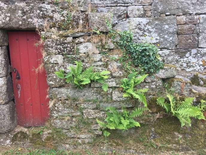 Le mur de granit d'une des maisons restaurées du hameau de Saint-Antoine, près de Guingamp, qui accueille le festival«Lieux mouvants», se pare d'herbes folles, de lierre, de fougères, de mousses et de lichens.