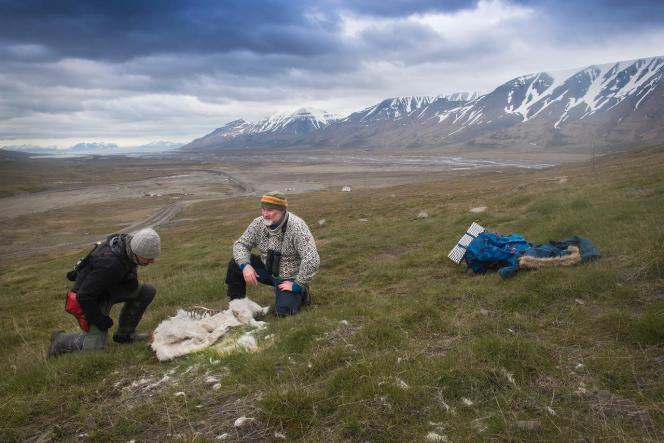 Leschercheursde l'institut polaire norvégien près du cadavre d'un renne, sur l'île deLongyearbyen, dans l'archipel desSvalbard, en juin.
