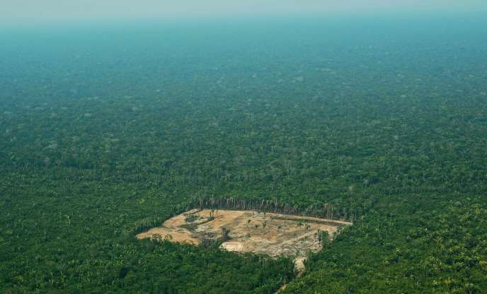 Brazil: deforestation in July up 278% compared to the same period in 2019