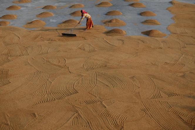 Une rizière près de Calcutta, en Inde, le 31 janvier.