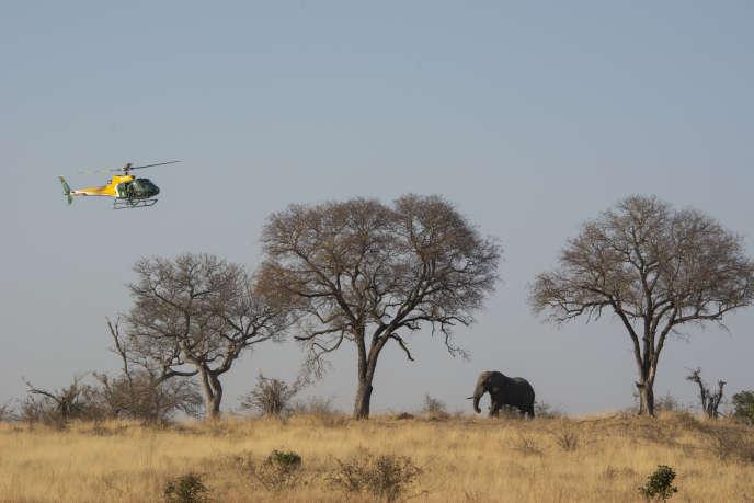 Une campagne de dépistage de la tuberculose est en cours, le 29juillet, dans le parc Kruger (Afrique du Sud), où vivent 20 000 éléphants.
