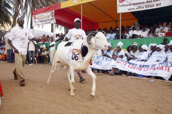 Lors d'un concours d'élevage à Dakar, en novembre 2010.