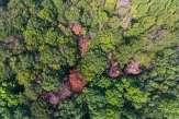 Climat: la croissance végétale en panne sèche